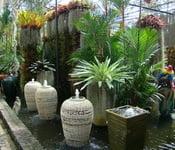 nong-nuch-tailand-foto-1